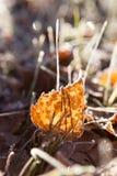 Frostbjörksidor på jordning Royaltyfria Foton