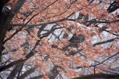 Frostblätter Lizenzfreies Stockbild
