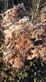 Frosted autumn Stock Photo