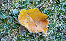 Frosted autumn leaf Royalty Free Stock Photography