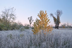 Frosted Autumn Meadow Royalty Free Stock Photo