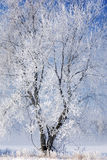 Frosted Bare Tree Royalty Free Stock Photos