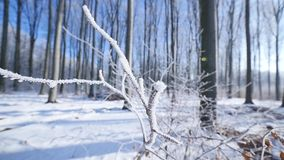 Frosted bare tree branch in winter background stock footage