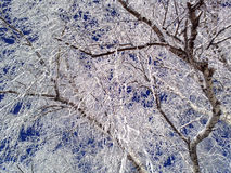 Frosted birch branches close-up. Stock Photos
