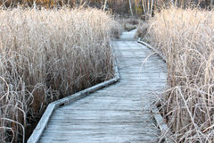 Frosted Boardwalk. Morning frost in winter on boardwalk and swamp grass Royalty Free Stock Photography