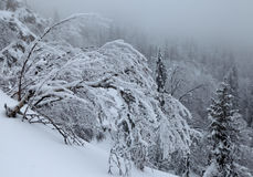 Frosted branch of birch Stock Photography