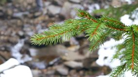 Branch river mountain. Through frosted branches river mountain stock video footage