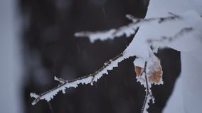 Frosted Branches stock footage