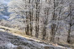 Frosted branches of trees in the winter forest. Frosted branches of trees in the beautiful winter forest Royalty Free Stock Images