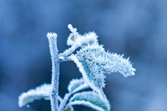 Frosted brunch in winter time Stock Image