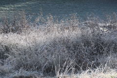 Frosted bush. Es in a morning sun with soft shadows Royalty Free Stock Photos