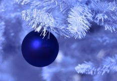 Frosted christmas. Blue ornament on a white pine tree with blue filter Royalty Free Stock Photography