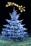 Frosted christmas tree. Blue Christmas tree and falling star Stock Photos
