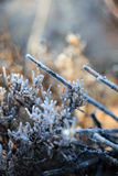 Frosted desert plant life stock images