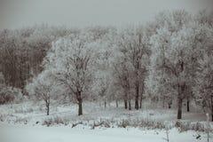 Frosted drzewa Obraz Stock