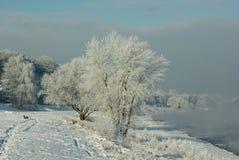 Frosted drzewa Fotografia Royalty Free