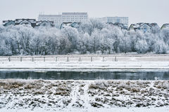 Frosted drzewa na rzece Zdjęcia Royalty Free