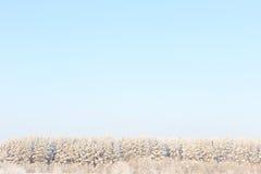 Frosted drzewa przeciw niebieskiemu niebu Zdjęcie Royalty Free
