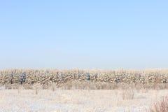 Frosted drzewa przeciw niebieskiemu niebu Obrazy Stock