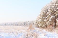 Frosted drzewa przeciw niebieskiemu niebu Fotografia Royalty Free