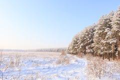 Frosted drzewa przeciw niebieskiemu niebu Obraz Royalty Free