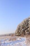 Frosted drzewa przeciw niebieskiemu niebu Zdjęcia Stock