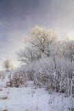 Frosted drzewa przeciw niebieskiemu niebu na ranku Obraz Royalty Free