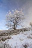 Frosted drzewa przeciw niebieskiemu niebu na ranku Obraz Stock