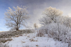 Frosted drzewa przeciw niebieskiemu niebu na ranku Obrazy Stock