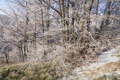 Frosted drzewa przeciw niebieskiemu niebu na ranku Fotografia Stock