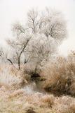 Frosted drzewa przy rzecznym Paar Zdjęcie Royalty Free