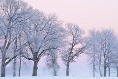 Frosted drzewa przy świtem Zdjęcie Royalty Free