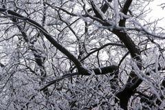Frosted drzewa wzdłuż sposobu Zdjęcia Stock