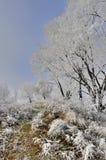 Frosted drzewo krajobraz i trawa Zdjęcie Royalty Free