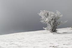 Frosted drzewo kształtujący wiatrem Zdjęcie Royalty Free