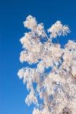 Frosted drzewo zdjęcia stock
