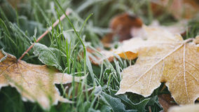 Frosted fall leaves on the grass in the morning Stock Photos
