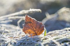 Frosted fallen autumnal leaf in close up. Beautiful macro of dead leaf Stock Photography