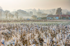 Frosted field at a village in Bavaria Stock Photography