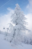 Frosted fir at the ski slope. With ski lift in background Royalty Free Stock Images