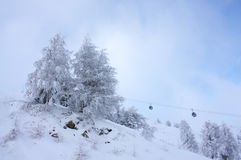 Frosted firs at the ski slope. Frosted firs at the ski slope with ski lift in background Royalty Free Stock Photos