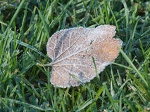 Frosted Foliage Stock Photos