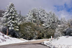 Frosted Forest. The forest is frosted with snow and ice on Mount San Jacinto in Southern California Royalty Free Stock Photo