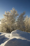 Frosted forest. In winter time Royalty Free Stock Images