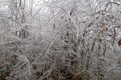 Frosted forest. Cold and fog. Branches of trees icing Stock Image