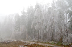 Frosted forest. Cold and fog. Branches of trees icing Royalty Free Stock Photos