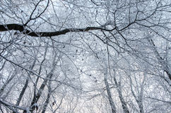 Frosted forest Stock Photos