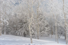 Frosted forest in Russian mountains. Winter wonderland in Russian taiga Stock Photography