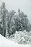 Frosted gałąź drzewa przeciw szaremu niebu Obrazy Stock