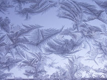 Frosted glass. Frosty natural pattern on winter window Royalty Free Stock Image